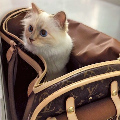 lagerfeld 39 s choupette leads trend as pets become brand representatives luxury daily advertising. Black Bedroom Furniture Sets. Home Design Ideas