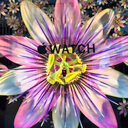 Selfridges window display featuring Apple watch
